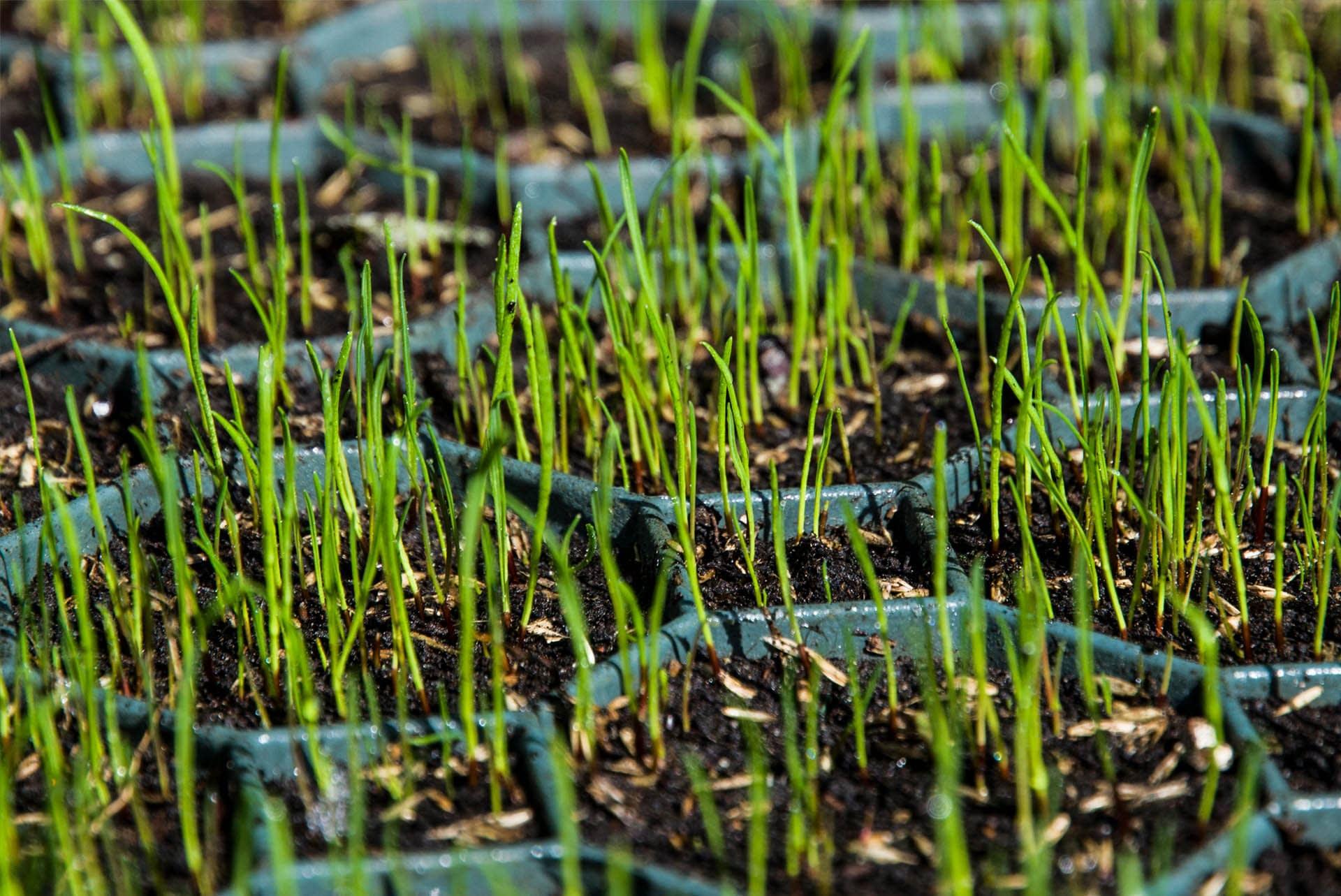 elite-grass-grid-composite-alternative-ground-reinforcement-stabilisation-grass-filling-outdoor